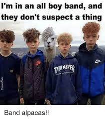 Boy Band Meme - i m in an all boy band and they don t suspect a thing band alpacas
