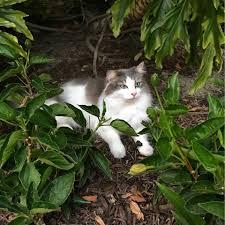 cats of disneyland home facebook