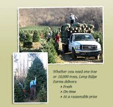 north carolina fraser fir christmas tree farm accommodation