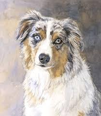 l australian shepherd edie fagan watercolor artist