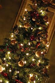 Christmas Tree Shopping Tips - decorating the perfect christmas tree rainforest islands ferry