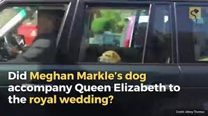 queen elizabeth dog content jwplatform com thumbs mg68lz51 720 jpg