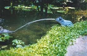 pond ornaments aquatic interiors seacave