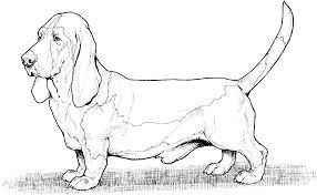 1 coloring page dog dog coloring pages big bang fish weiner dog