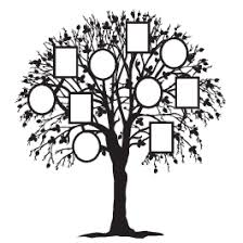 family tree wall decals dezign with a z