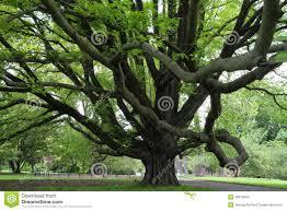 majestic tree stock photo image of nature brown beautiful