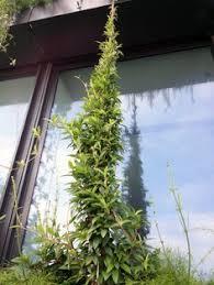 Vertical Gardens Miami - pérez art museum miami vertical garden patrick blanc garden