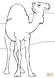 dromedary coloring page free printable coloring pages
