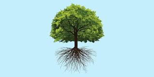 think like a tree what we can learn from the oaks that survived