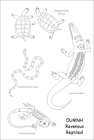 lizard coloring pages getcoloringpages
