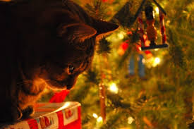 cat christmas 8 steps to cat proof and dog proof your christmas tree