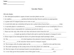 vascular plants 9th 12th grade worksheet lesson planet