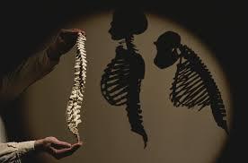 human evolution 101