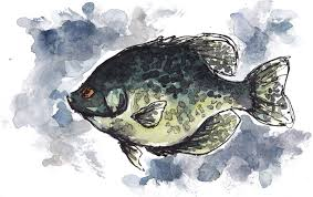 target bemidji black friday ad landing a minnesota record fish u2013 what to target what u0027s a pipe