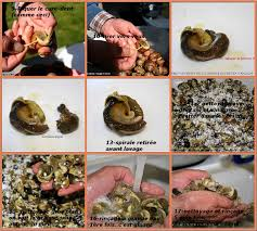 comment cuisiner des escargots la table lorraine d amelie preparer les escargots pour la conserve