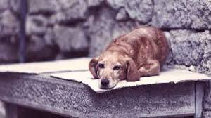 Causes Of Sudden Blindness In Dogs Signs Of Depression In Dogs U0026 How To Deal With It Petcarerx