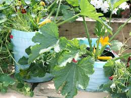 How To Plant Vegetables In A Garden by Growing Zucchini In A Bag Hgtv