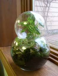 pictures of terrariums