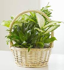 funeral plants funeral plants fn p004 everest florist and gifts