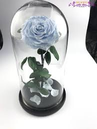 single rose flower in glass dome single rose flower in glass dome