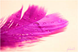 purple feather purple feather by berryu on deviantart