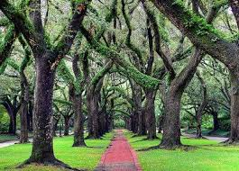 image result for oaks alley south blvd houston houston