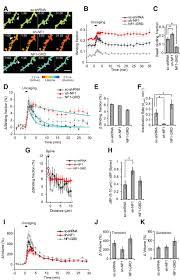 neurofibromin is the major ras inactivator in dendritic spines