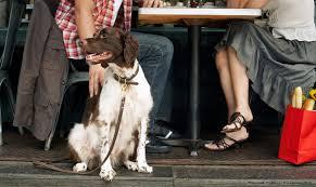 the 5 best dog friendly restaurants on hilton head palmetto