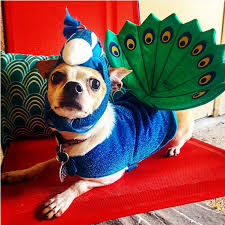 Halloween Costumes For Dogs 53 Funny Dog Halloween Costumes Cute Ideas For Pet Costumes