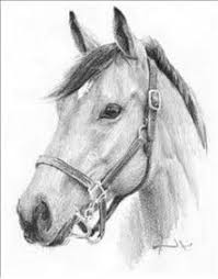 25 trending drawings of horses ideas on pinterest horse sketch