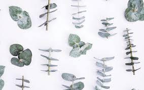 tropical desktop wallpapers dowload free wallpaper filestrendy peas