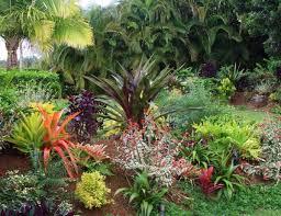 Tropical Gardening Ideas Flowering Plants Profile