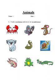 english teaching worksheets invertebrates