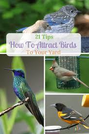 17 best birds in the garden images on pinterest backyards big