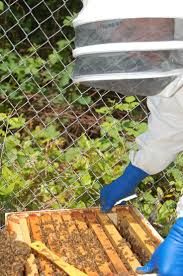 11 best hives in the city a book about urban beekeepers images on