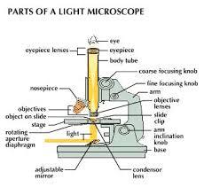 compound light microscope function microscope optical microscopes students britannica kids