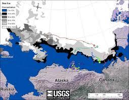 Barrow Alaska Map by Polar Bears At Kaktovik Alaska Not Stranded Due To Retreating Ice