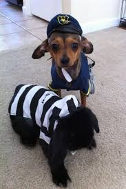 party city halloween costumes for dogs pet halloween costumes southern living awesome country style