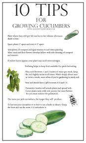 270 best fun gardening images on pinterest organic gardening