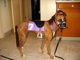 Funny Dog Costumes Halloween Big Dog Google Nala Dog