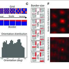 grid pattern alpha figure 1 simulation methods a model architecture a population