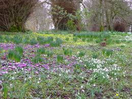 garden design flowers bulbs spring woodlands ireland irish