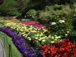 gorgeous butchart gardens in british columbia canada