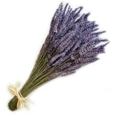 lavender bouquet dried lavender bouquet localharvest