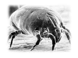 Why Do Bed Bugs Come Out At Night Diagnosing Mysterious