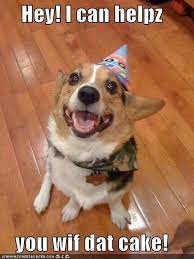 Corgi Birthday Meme - 86 best corgis in party hats images on pinterest corgi corgis