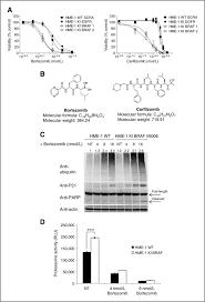 braf v600e is a determinant of sensitivity to proteasome