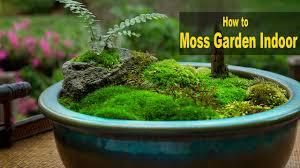 download how to grow moss solidaria garden