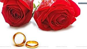 red rose rings images Picture of two roses red roses and golden wedding ring wallpaper jpg