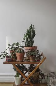 21 best indoor plants decor images on pinterest indoor plant